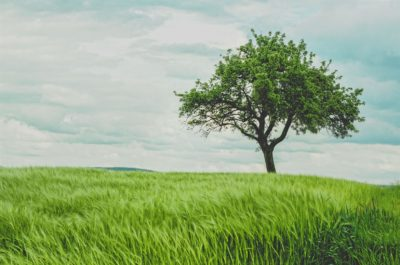 Green tree on grassland during daytime.