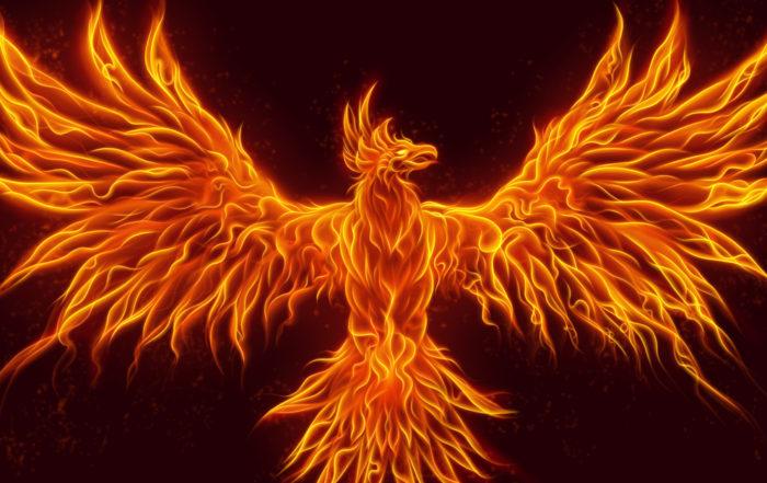 illegal phoenix activity